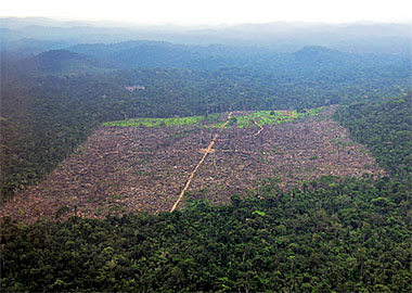 wildlife biodiversity and net deforestation rates How landsat helps: forests that's net loss that's including all the new trees that deforestation rates like brazil and.