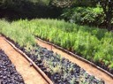Agroforestry Nursery in Kenya