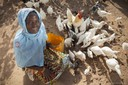 Salimata Sagnol feeds her chickens outside their coop in the village of Tengréla, Burkina Faso. A U.S. Millennium Challenge Corporation program funded a package of agricultural trainings along with construction materials for her chicken coop and ongoing technical support for Sagnol and other rural farmers like her.