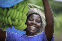 Using modern technology like irrigation and better agricultural practices, as well as being linked to one of Zimbabwe's major banana marketing companies, helps ensure a reliable source of income and food security for smallholder banana farmers like this one in Zimbabwe.