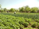 Integrated Farming - Tajikistan