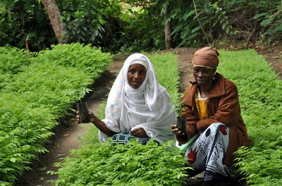 AWF: Supporting Joint Forest Management by Local Communities in the Kolo Hills of Northern Tanzania
