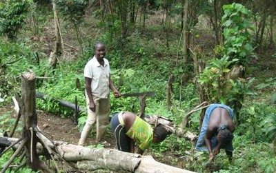 Clear-cut forest in Nimba County