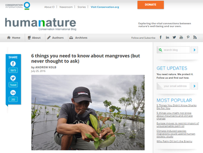 6 Things You Need to Know About Mangroves (but never thought to ask)