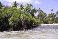 New Research Finds Mangroves Key to Climate Change